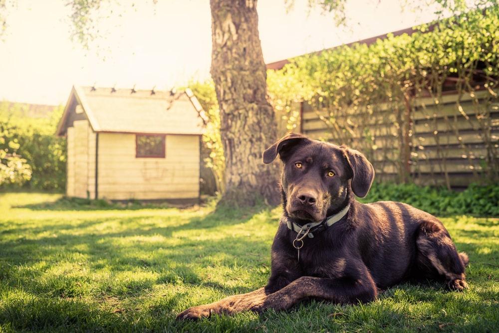 Pies w ogrodzie – w jaki sposób ogrodzić działkę?